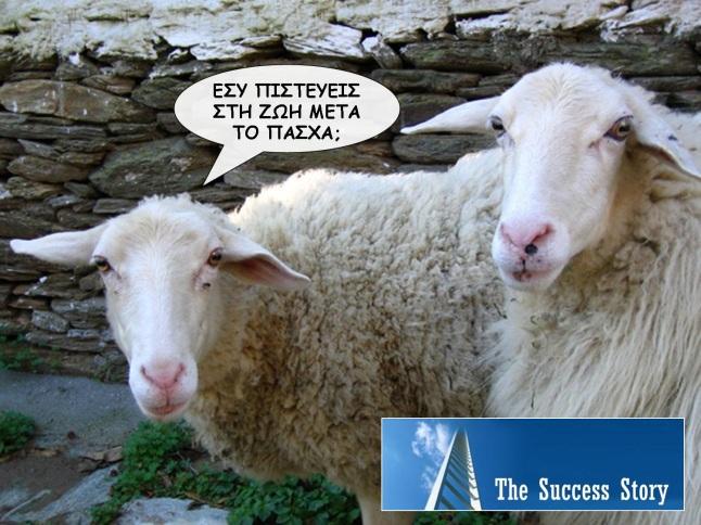 sheepcq4